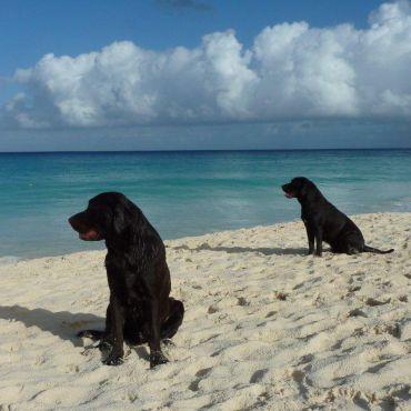 twee JoJaMaCos op Aruba